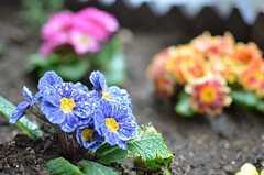玄関脇には花壇もあります。(2013-03-11,共用部,OTHER,1F)