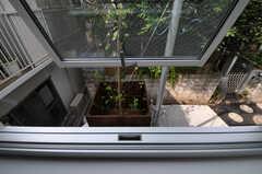 窓からは玄関先に植えられた木蓮の木が見えます。(203号室)(2011-06-14,専有部,ROOM,2F)