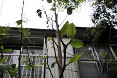 玄関先には木蓮の木が植えられています。(2011-06-14,共用部,OTHER,1F)