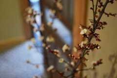 玄関には横浜で調達したという梅の枝が飾られていました。(2015-02-05,周辺環境,ENTRANCE,1F)