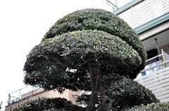 庭の植木はキレイにカットされています。(2012-02-28,共用部,OTHER,1F)