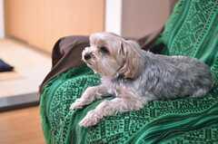 入居者さんの愛犬、ポコちゃん。ペットの飼育も可能です。(2014-01-14,共用部,LIVINGROOM,1F)