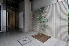 シンボルツリーのミモザが植えられています。左右が自転車置き場です。(2011-07-22,共用部,GARAGE,1F)