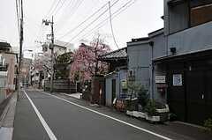 東京メトロ日比谷線・入谷駅からシェアハウスへ向かう道の様子。(2012-04-10,共用部,ENVIRONMENT,1F)
