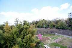 """ベランダからは""""パークビュー""""。(501号室)(2012-04-18,専有部,ROOM,5F)"""