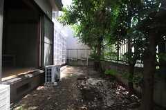 青々と繁った木が並びます。(103号室)(2013-07-23,専有部,ROOM,1F)