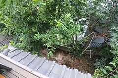 窓から見下ろした庭の様子。(2013-07-23,専有部,ROOM,2F)