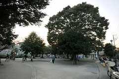 シェアハウスの近くにある公園の様子。(2013-10-28,共用部,ENVIRONMENT,1F)