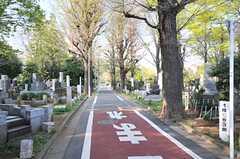雑司ヶ谷霊園がすぐ近く。気持ちのよい散歩コースです。(2014-04-09,共用部,ENVIRONMENT,1F)