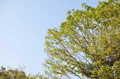 緑もいっぱい。(2014-04-09,共用部,ENVIRONMENT,1F)