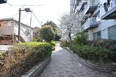 建物の目の前の遊歩道。桜も咲いています。(2015-03-31,共用部,ENVIRONMENT,1F)