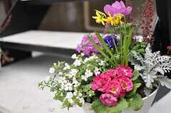 物件の随所には花が植えられています。(2013-02-14,共用部,OTHER,1F)