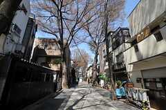 シェアハウス周辺の並木道。(2011-04-04,共用部,ENVIRONMENT,1F)
