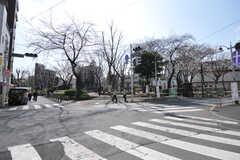 近くには桜の咲く公園があります。(2013-03-19,共用部,ENVIRONMENT,1F)