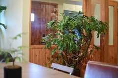 迫力があるグリーン。スタッフの間では「古代樹」と呼んでいるとか。(2013-03-21,共用部,OTHER,1F)