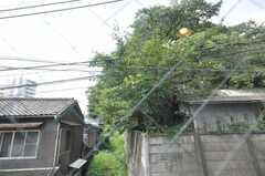 窓からの景色。目の前は桜の木。(2009-08-20,共用部,OTHER,2F)